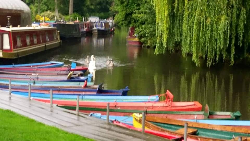Rowing boats and swans