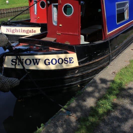 Snowgoose Bow