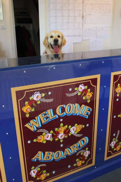 Dog on reception desk