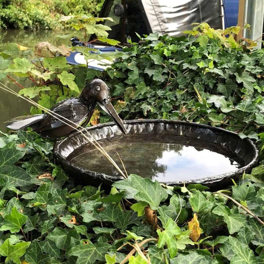Bird bath in Ivy